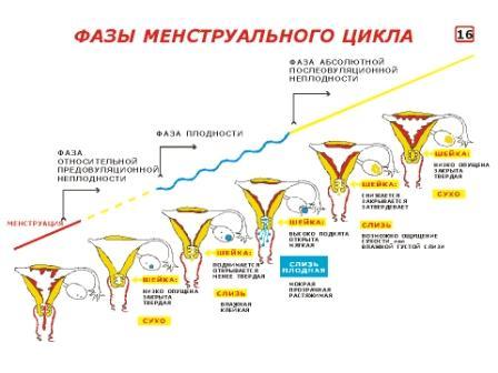 Нарушение менструально цикла Харьков Ла Вита Сана