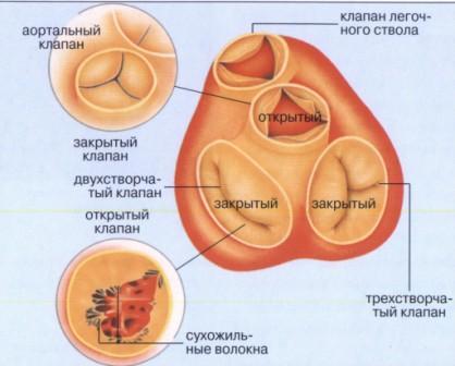 Диагностика и лечение пороков сердца Харьков Ла Вита Сана