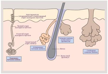 Лечение нарушения функций потовых желез в медицинском центре Ла Вита Сана